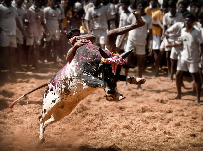 Top 10 Most Dangerous Sports in the World | Extreme Sports List, Bull Riding